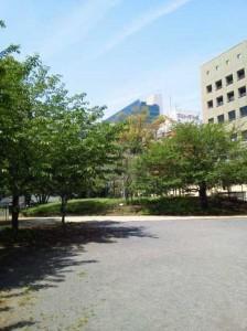公園のスペース