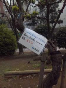 この木は登ってはいけません