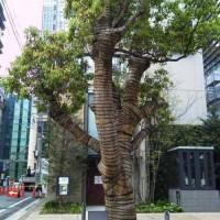 YUITOの御神木