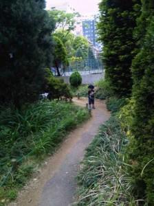 子どもと草木