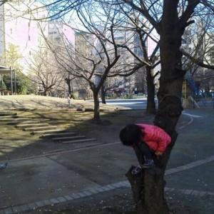 ソメイヨシノで木登り
